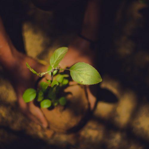 Top 5 des entreprises qui plantent des arbres pour nous !